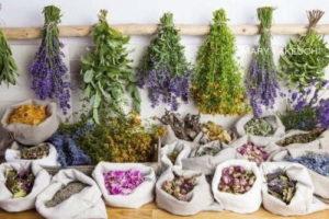 抗ウイルス薬用植物