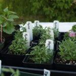 野生植物ではなく栽培植物を使用する理由
