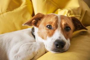 犬の胃粘膜の炎症