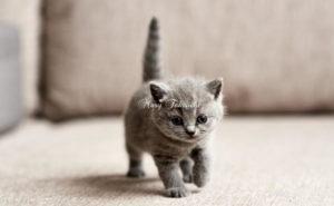 猫にハーブを与えることはできますか?
