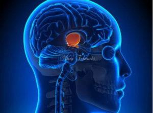 自律神経系の活動を調整する視床下部機能を高める植物療法